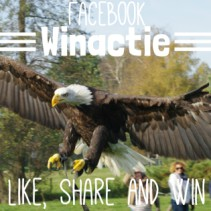 Facebook actie GRATIS Workshop Roofvogels