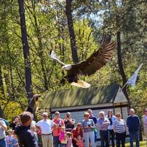 Roofvogels op Visserijdagen Harlingen 24 augustus 2016