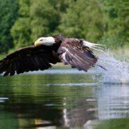 Roofvogelfotografie workshops 2019 Let op! Laatste plekken beschikbaar!