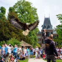 Roofvogeldemonstraties Pinksteren 2019